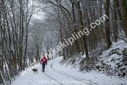 Woman and Dog walking in the Snow in Woodland - Winter, Snow, Woodland, Woman, Walking, Dog, Red Anorak,