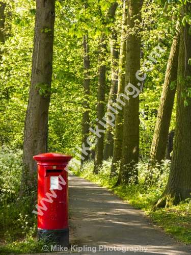 Red Pillar Box and Woodland Path - Pillar, Box, Post, Red, Woodland, Walk, Sping, Cow, Parsley,