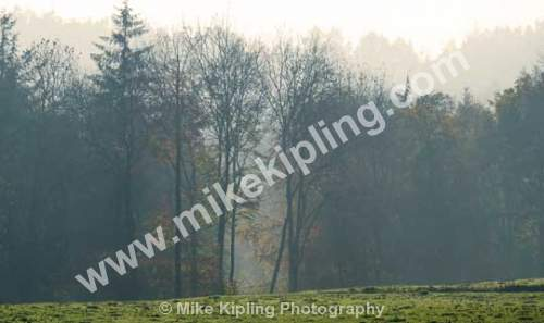 Woodland at Hutton in Autumn - Cleveland, Guisborough, Hutton, Woodland, Trees, Mist, Autumn,