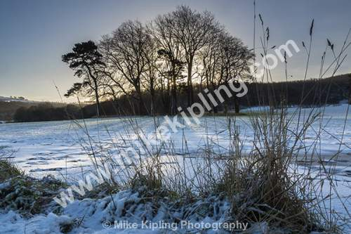 Copse of Trees and Snow, Hutton, Guisborough - Guisborough, Hutton, Copse, Trees, Winter, Snow, Grass,