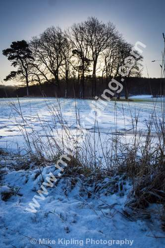 Copse of Trees and Snow, Hutton, Guisborough - Guisborough, Hutton, Copse, Trees, Snow, Winter, Grass,