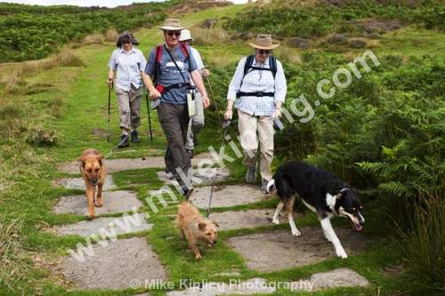 Walkers with Dogs near Dundale Pond, Levisham Moor near Pickering, North York Moors National Park - Yorkshire, Pickering, Levisham Moor, Dundale, Pond, Moors, National Park, Levisham, walkers, dogs, outdoors, walking