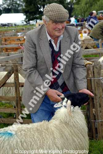 Stokesley Agricultural Show<br />North Yorkshire - show livestock judging events sheep