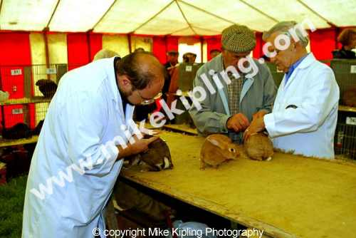 Stokesley Agricultural Show<br />North Yorkshire - show livestock judging events rabbits