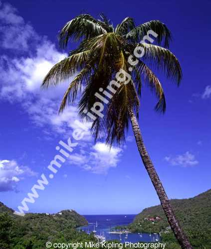 Marigot Bay<br />St Lucia, West Indies<br />Caribbean - island bay inlet palm tree