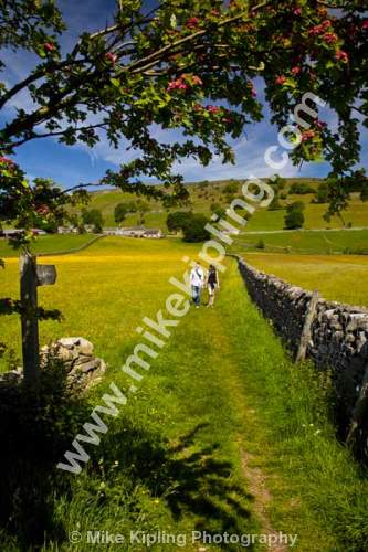 Couple walking through wild flower meadow near Healaugh, Swaledale, Yorkshire Dales National Park - Yorkshire, Swaledale, Healaugh, meadow, wild, flowers, yellow, buttercups, spring, footpath, couple, teo, walking, walkers,