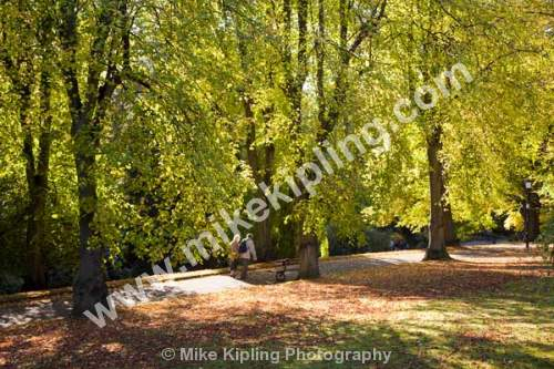 The Valley Gardens in Autumn, Harrogate, North Yorkshire - Yorkshire, Harrogate, Valley, Gardens, Autumn, colour, woodland, trees, recreation, park, couple, walking,
