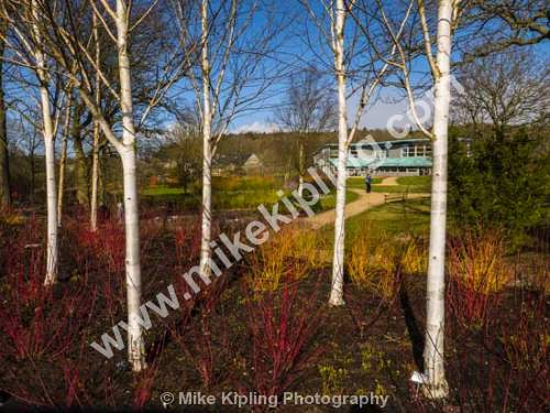 RHS Gardens at Harlow Carr, Harrogate, Yorkshire - Yorkshire, Harrogate, Harlow Carr, Gardens, Royal Horticultural Society, birch, trees,