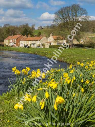 Spring at Sinnington Village and the River Seven, near Pickering, North Yorkshire - Yorkshire, Pickering, Sinnington, Village, Spring, River, Seven, Daffodils, Yellow,