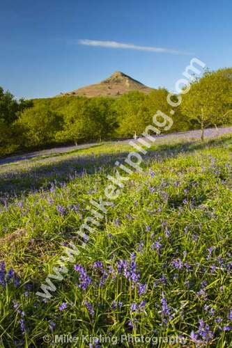 Roseberry Topping North Yorkshire Moors at Bluebell Time - Yorkshire, Newton under Roseberry, Roseberry. Topping, Spring, Flowers, Bluebells,
