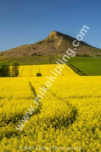 Roseberry Topping North Yorkshire Moors with Rape Field in Bloom - Yorkshire, Newton under Roseberry, Roseberry, Topping, Spring, Yellow, Rape, Field, Crop,