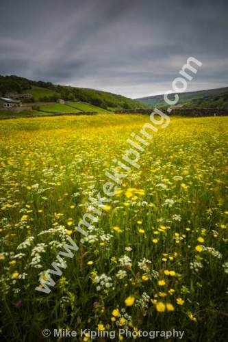 Slow Shutter Speed of Buttercup Meadow at Gunnerside, Swaledale Yorkshire Dales National Park - Yorkshire, Swaledale, Gunnerside, Wild, Flower, Meadow, Buttercups, Yellow,