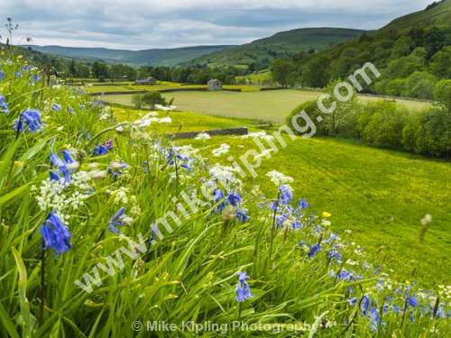 Wild Flower Meadow at Muker, Swaledale Yorkshire Dales National Park - Yorkshire, Swaledale, Muker, Wild, Flower, Meadow, Blue, Bells, Dale, Fells, Natural, Envoronment, Walls, Stone, Barns,