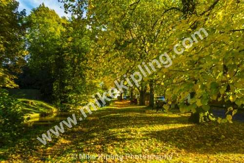 Levenside, Stokesley, North Yorkshire at Autumn - Yorkshire, Stokesley, Levenside, River, Leven, Autumn, Horse Chestnut, Trees,