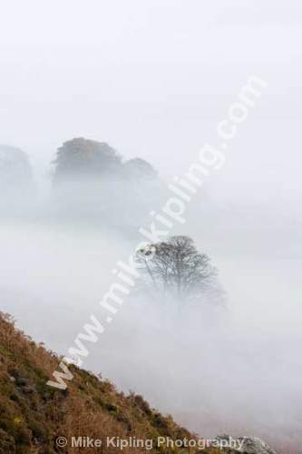 Trees in Mist Danby Dale, North York Moors National Park - Yorkshire, Danby Dale, Trees, Mist, Weather, Winter, Foggy, Autumn,